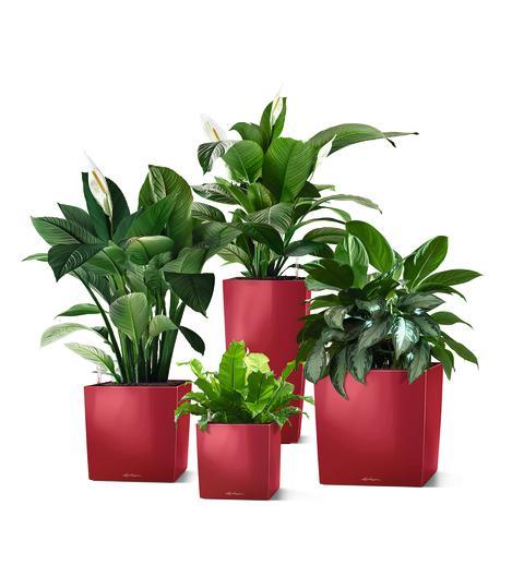 Grüne Lösungen für mehr Wohlbefinden mit LECHUZA CUBE Premium