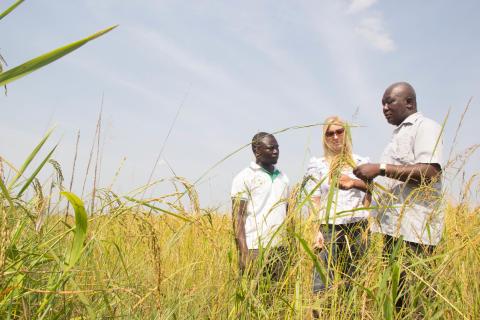 STING Go Africa utser 6 svenska bolag som satsar på Afrika