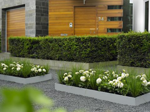 Modern dahlia- och gräsplantering