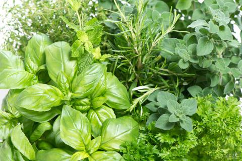 Växtvägg av kryddor – en smakförhöjare för eleverna