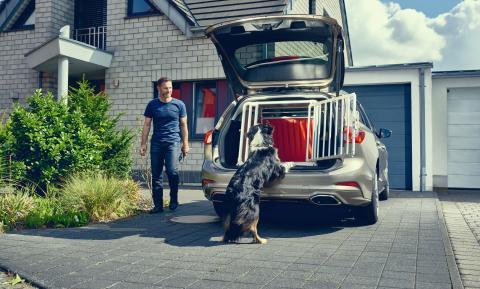 Ein Drittel aller Hundebesitzer gefährden sich und andere Verkehrsteilnehmer, weil sie Tiere im Auto ungesichert lassen