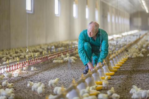 Med anledning av fågelinfluensa i hobbybesättning i Danmark