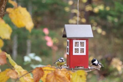 Talviruokinta tuo iloa linnuille, mutta lintulaudan vieraiden kuvaaminen voi olla haasteellista