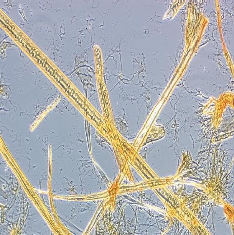 Malda fiber