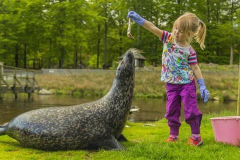 Skånes Djurpark förväntas bli Skånes största turistmagnet 2016