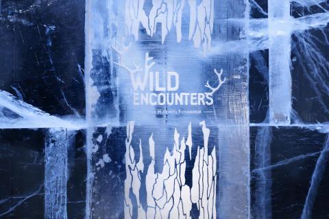 Wild Encounters 2016