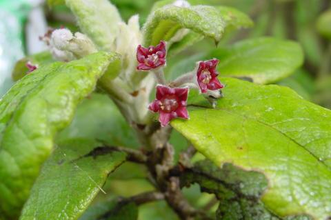 Hundratals växtarter har redan utrotats – vad spelar det för roll?