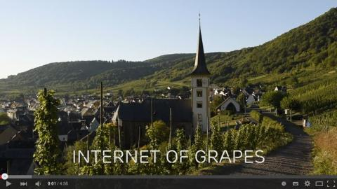 Connected vineyards