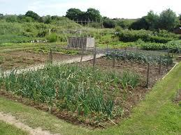 Elgin allotments move