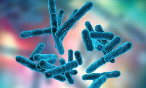 Probiotics Market Insights Growth Opportunities and Forecast to 2027 with Leading Companies-Nestle S.A, Probi AB, Protexin, Yakult Honsha