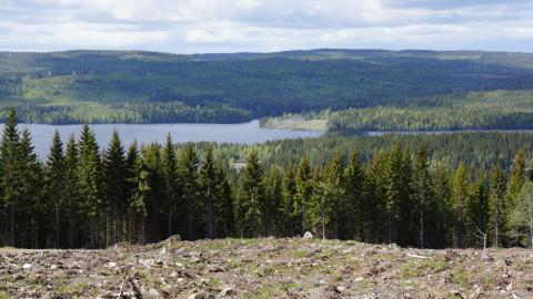 Skog och hygge