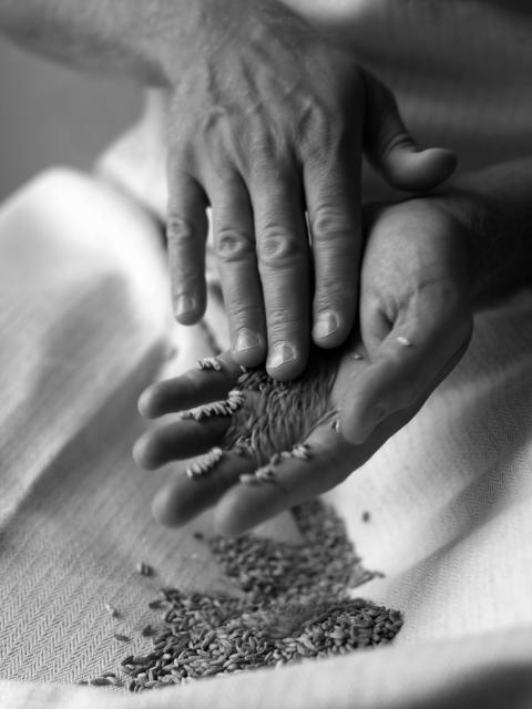 Innehållet av fibrer allt viktigare när vi svenskar väljer bröd