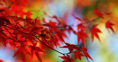 November i din trädgård