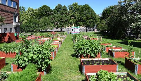 Hållbarhetsveckan: Får det gröna plats?