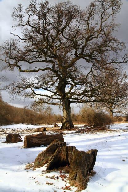Jakt på vildsvin i nationalparken i Dalby