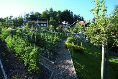 Alfred Vogelin puutarhassa viljellään luonnon ehdoilla