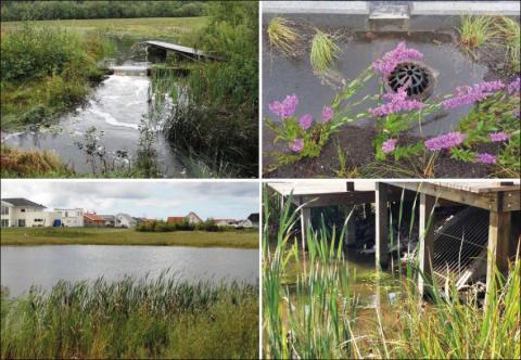 Ny SVU-rapport: Kunskapssammanställning dagvattenrening (avlopp och miljö)