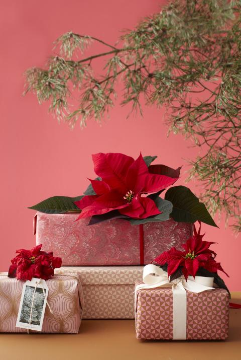 Julminnen