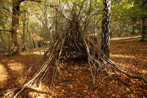 Gör en koja i höstskogen! Foto smålandsbilder.se