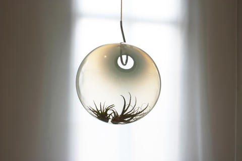 Katja Pettersson_Welcome_Back_terrarium_3