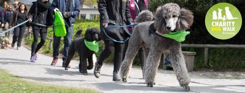 Stockholm Charity Dog Walk - För djurfria forskningsmetoder