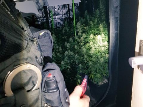 Arrest after cannabis find in Brighton