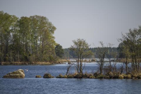 Naturreservatet Bjurkärr