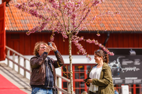Trädgårdsdagarna på Wenngarn  den 30 april – 1 maj