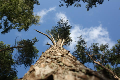 Matematiska modeller förklarar växters strategier