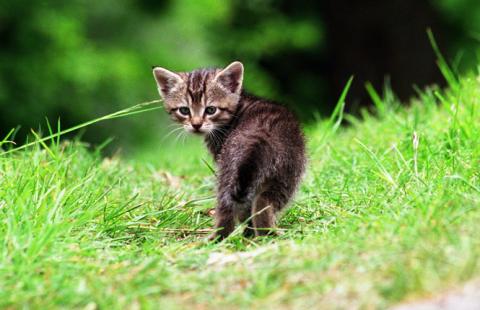 Djurskyddet startar kampanj för #allakatter