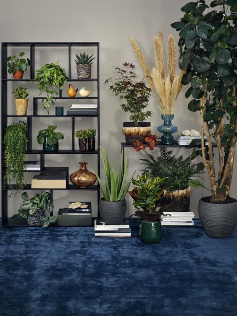 Interfloras höstkollektion 19