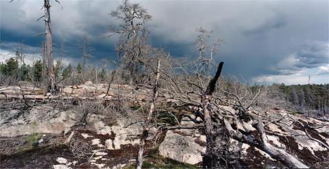 Pressinbjudan: Foton och samtal - Bilder av skogen