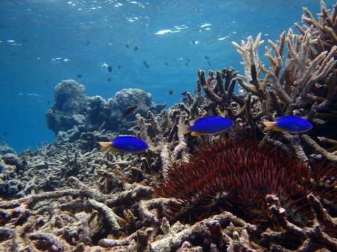 Död korall