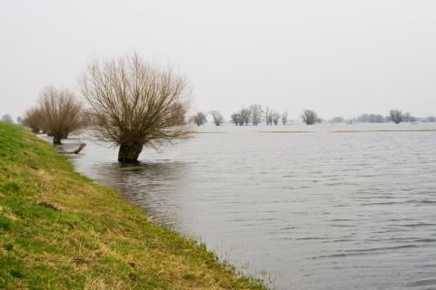 SMHI förmedlar pengar till svensk klimatanpassning