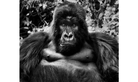 David Yarrow -KingKong