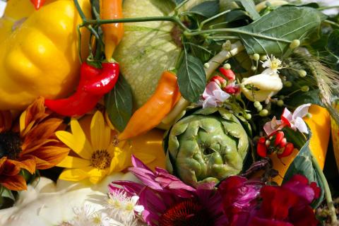 Höstfest i Bergianska trädgården lockar trädgårdsentusiaster