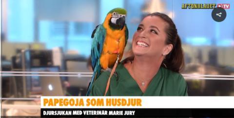 Så tar du hand om en papegoja