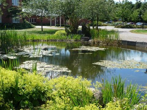 Mjärdevi Science Parks nyhetsbrev vecka 5 2011