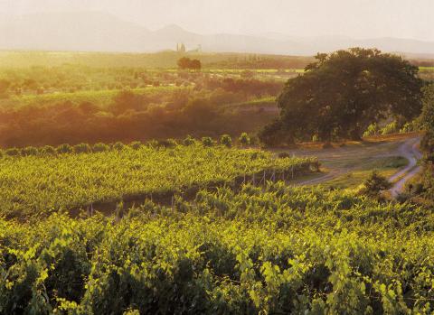 Col d´Orcia sol över vingården i Toscana
