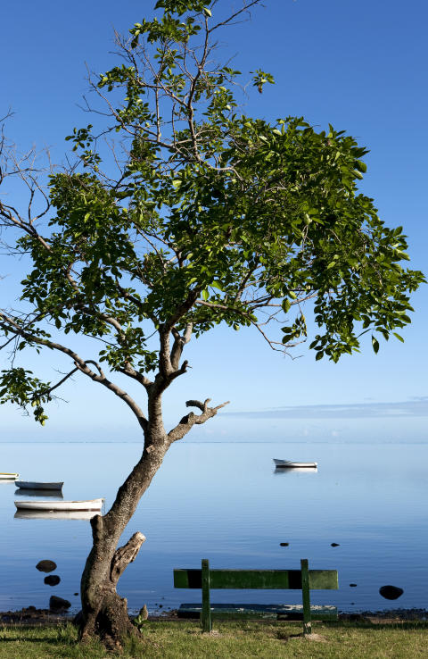 Mauritius_arbre ©MTPA_Bamba