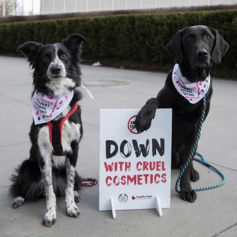 Hundar stöttar The Body Shops rekordkampanj i djurprotest vid FN