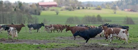 Betessläpp för djur på KRAV-märkta gårdar