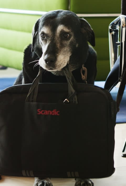 A long-time Scandic favourite retires