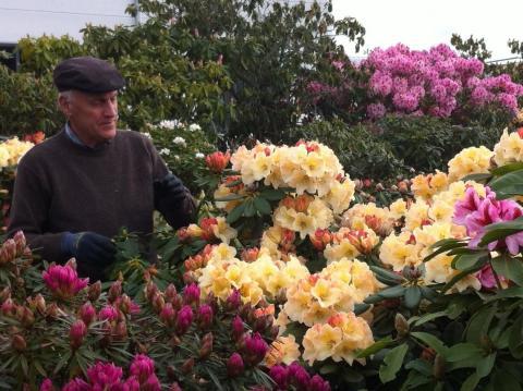 Floraliën Gent afbeelding 4