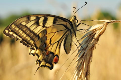 The bacterium and the butterfly: Improving microbial diversity on dairies with a lesson from chaos theory
