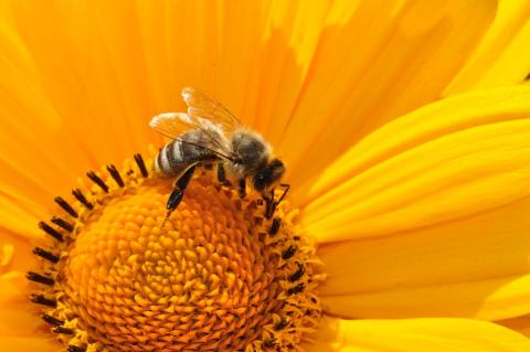 QYResearch: Bees Wax Industry Research Report