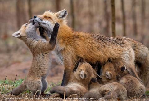 Brittany Crossman_Canada_Open_Natural World Wildlife_2019