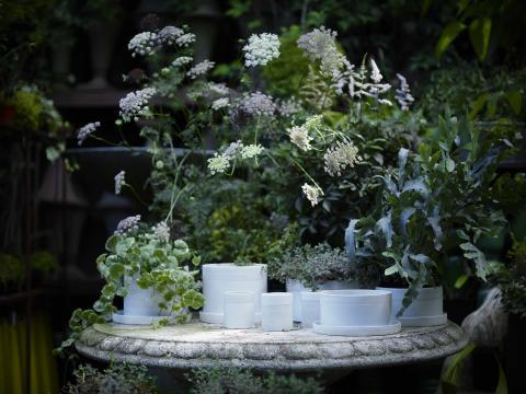 The mateus urban garden collection
