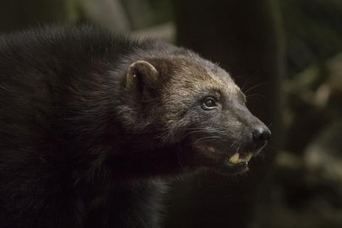 Des extraordinaires photos des espèces animales les plus menacées d'Europe