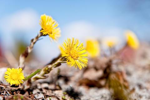 Våren är tidig i år – hur långt har den kommit hos dig?